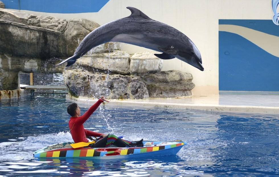 花蓮海洋公園,是台灣東部唯一主題遊樂園,位於花蓮壽豐鄉,距花蓮市中心約 30 分鐘車程,有 8 大主題景區,也是台灣第一座以海洋為主題並結合自然景觀、休閒飯店主題樂園 東南旅遊