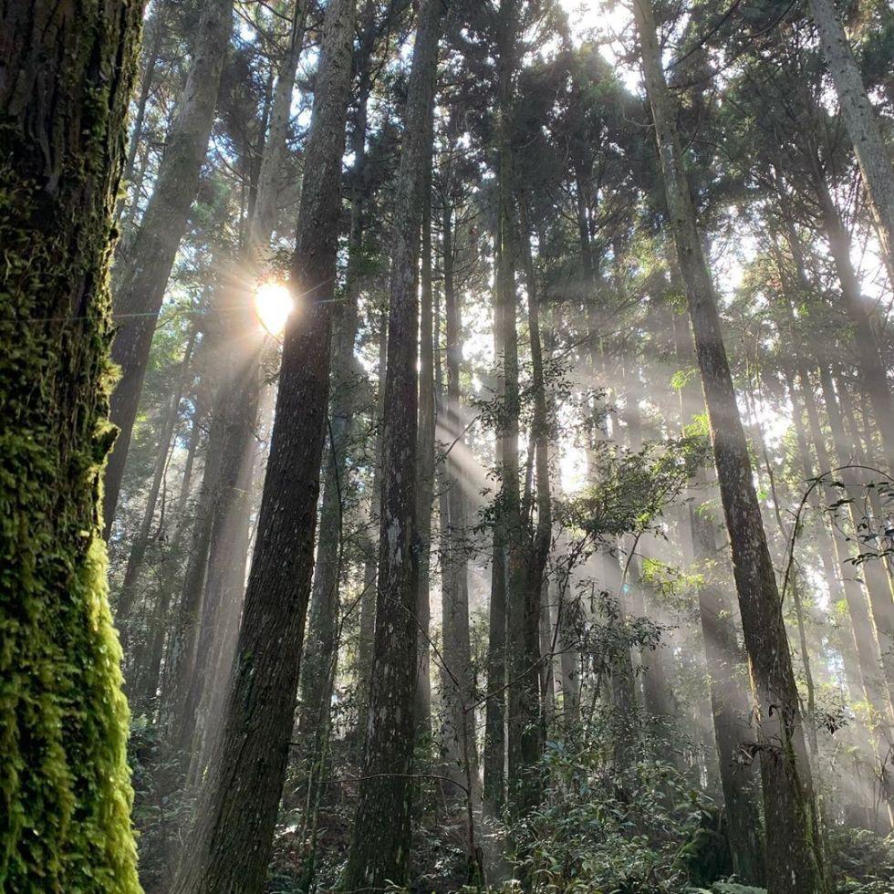 新竹野馬瞰山森林步道|東南旅遊