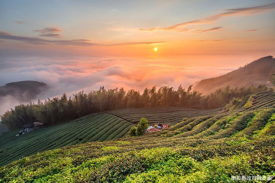 大崙山觀光茶園| 東南旅遊
