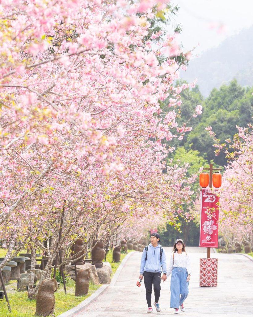 九族文化村櫻花 東南旅遊