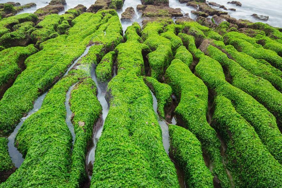 ▲ 石門老梅綠石槽 (圖片來源/東南旅遊)