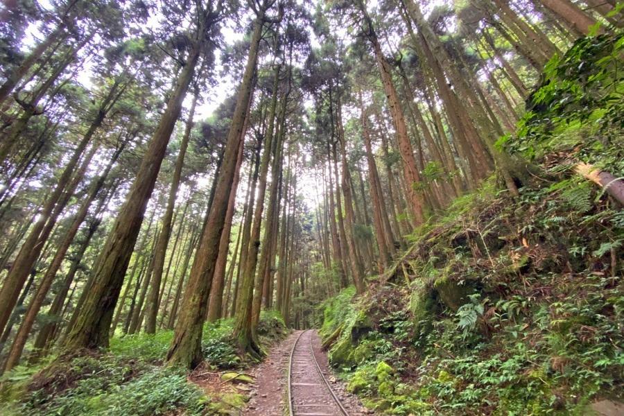 特富野古道|東南旅遊