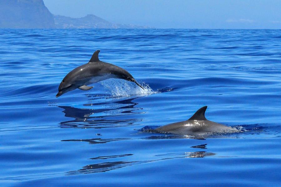 追海豚|東南旅遊