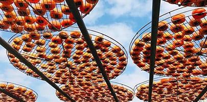 新竹大湖柿餅|東南旅遊