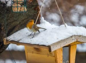 Nichoir et nourriture oiseau hiver
