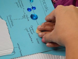 Two hands, one leading the other on a tactile chart explaining menstrual cycle.