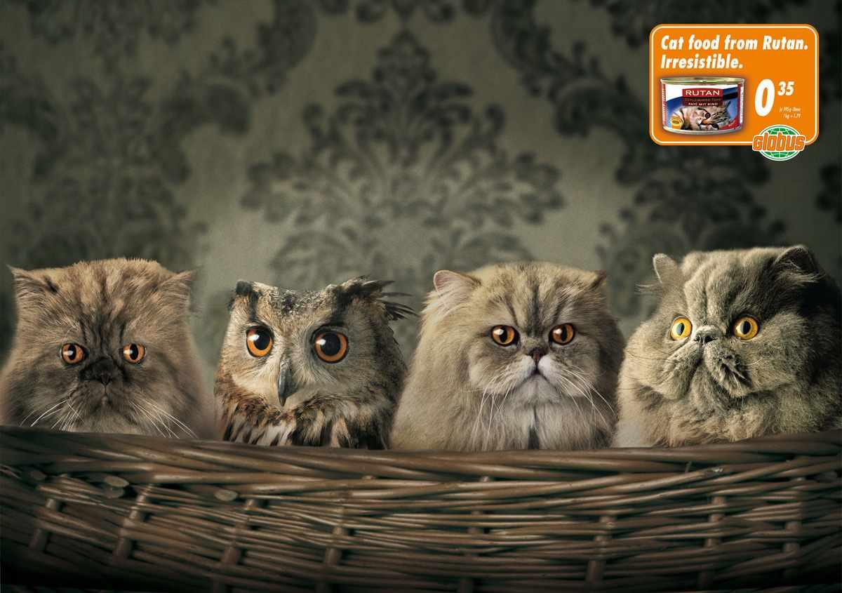 Globus_Wannabe_Owl