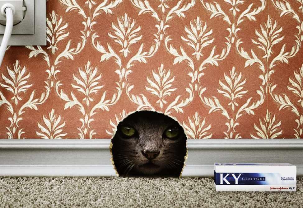 KYcat