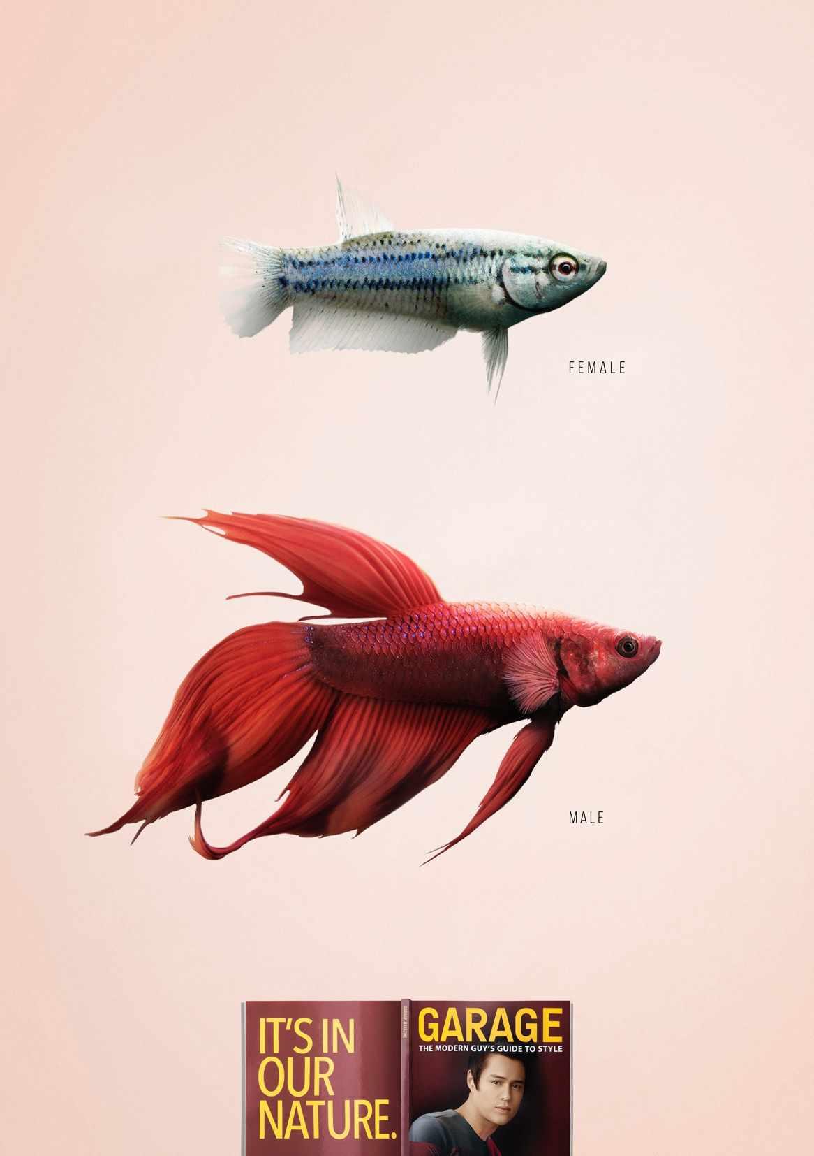 garagefish_aotw