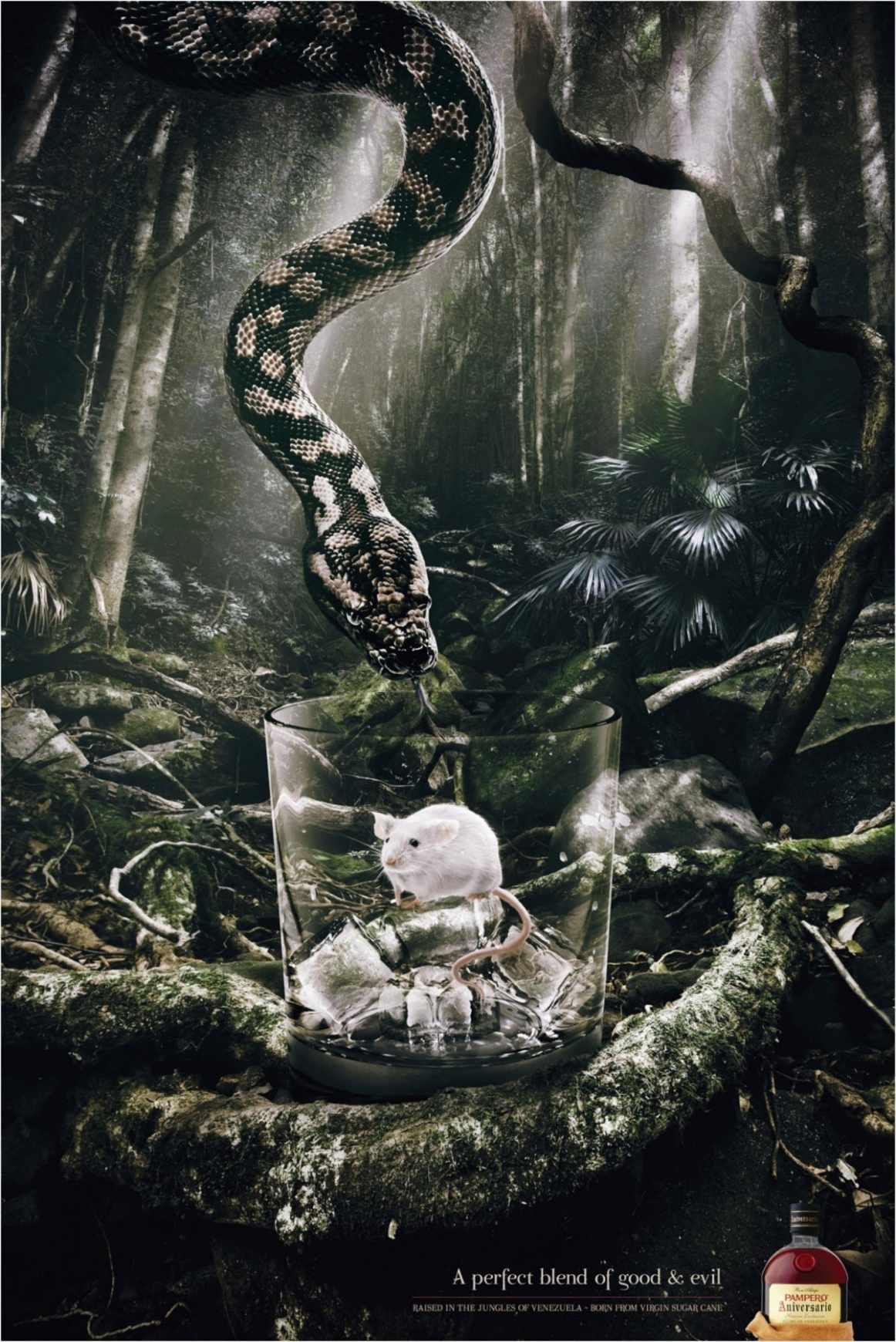 snake_aotw