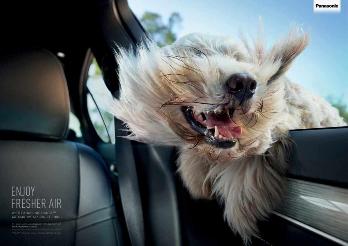 windblown-dog