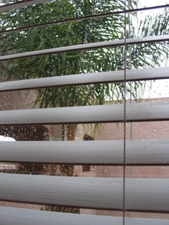 palmtreerainwindow.jpg