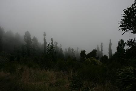 Ile de la Réunion - janvier 2011 - 063
