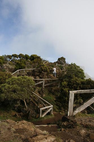 Ile de la Réunion - janvier 2011 - 385