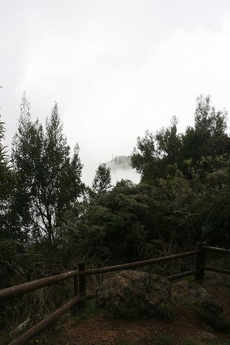 Ile de la Réunion - janvier 2011 - 060