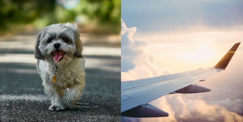 Perrito y ala de avión