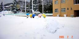 snow224.jpg