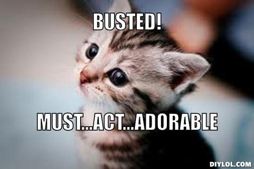 cute-kitten-meme-generator-busted-must-act-adorable-8602c7