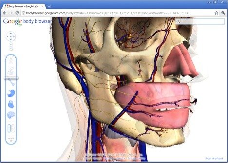 Google Body - 3D view of our body