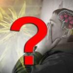 Le psicosi associate al consumo di cannabis. Parte quarta