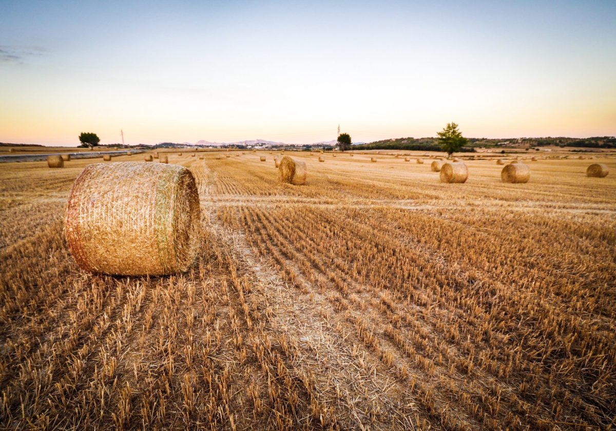 SovEcon cut 2020/21 Russia's wheat export estimate by 10%