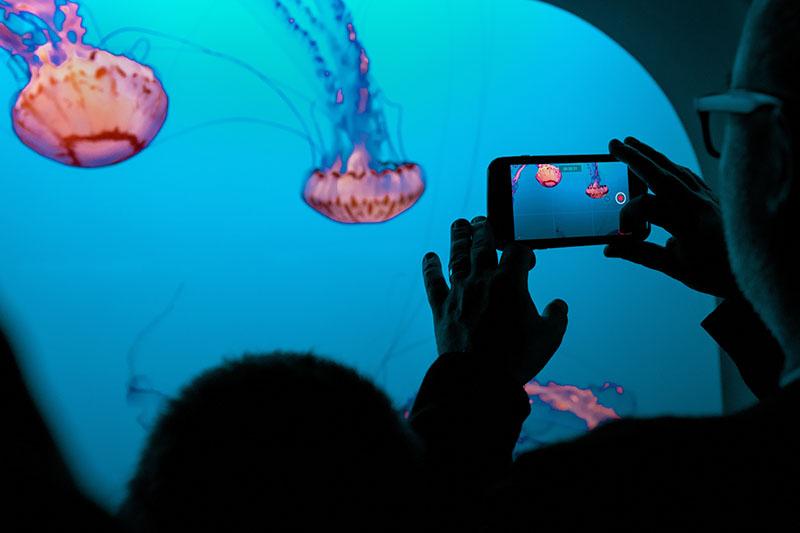 A man recording jellyfish on his phone at the aquarium