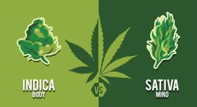 Smokazon 101: 10 Differences Between Sativa vs Indica