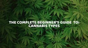 The Complete Beginner's Guide to Cannabis Types