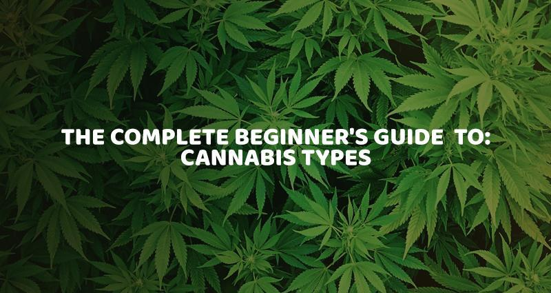 The Complete Beginner's Guide to Cannabist Types