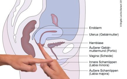 Ist vagina die lang wie Gebärmutterhals