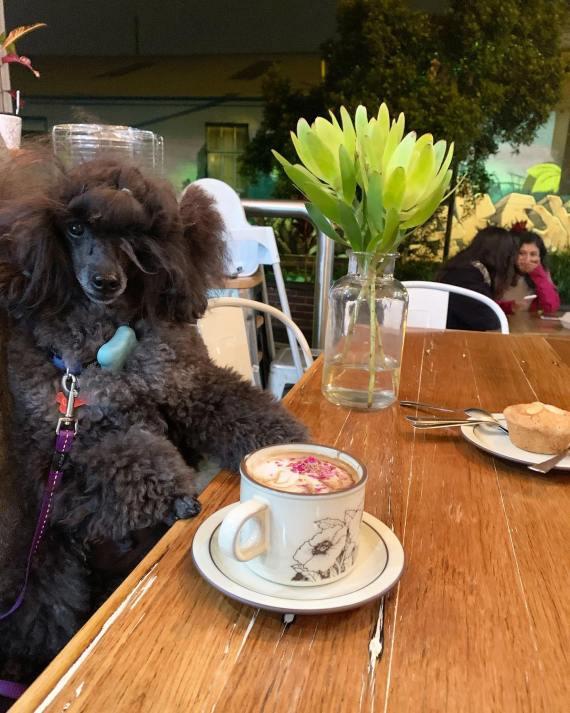 Dog-friendly cafes Khamsa