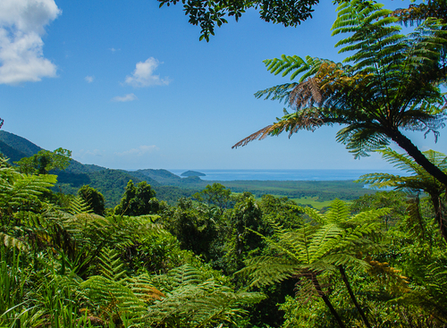 Coral Sea from the Daintree