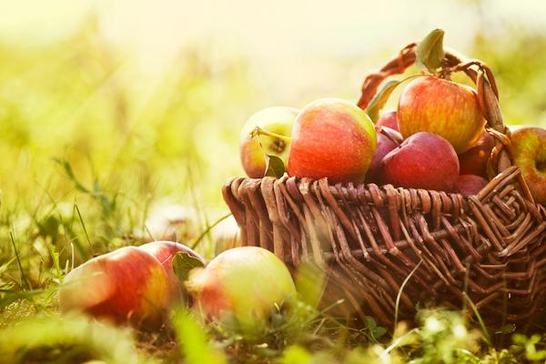 Agriculture biologique : 5 raisons d'investir dans ce secteur