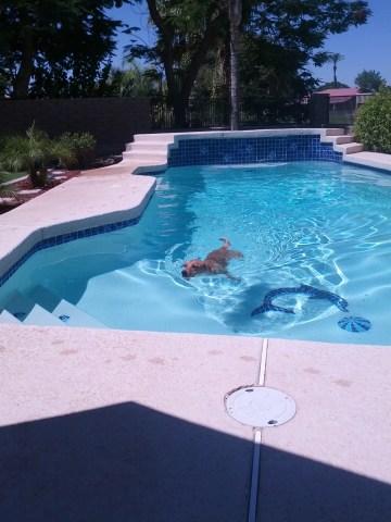 Frankie enjoying pool