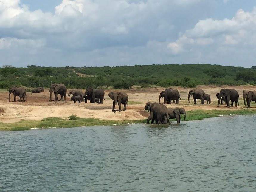 水場で戯れる象の群れ、夢か現実か分からなくなります