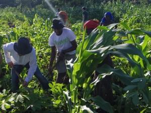 草刈り作業を僕らも手伝います
