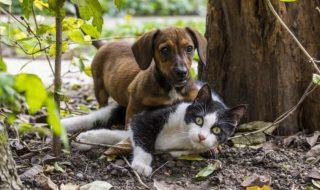 Assicurazione Cane e Gatto