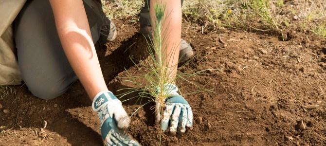 SRP celebrates Arbor Day