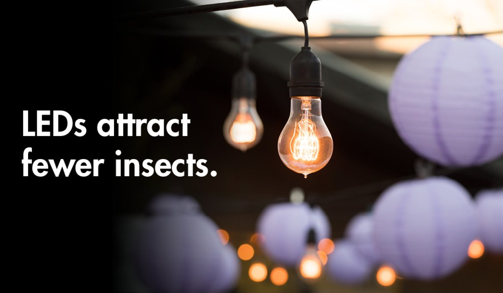 LED lightbulbs attract fewer insects.