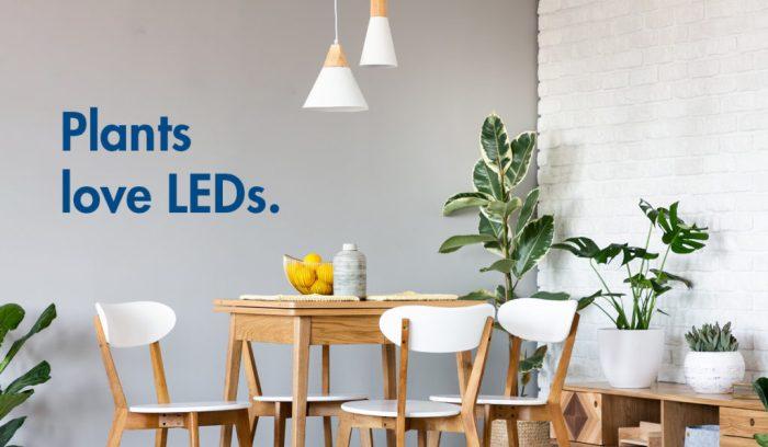 Plants love LED lightbulbs.