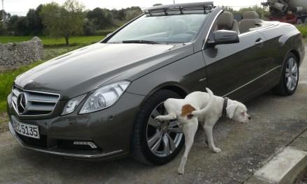 Xixi de cachorro nas rodas do carro, o que fazer ?
