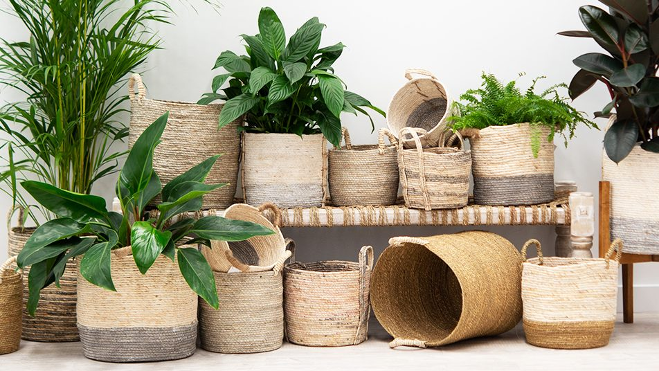 Tips to Take Care of Plants in Storage as a Landscaper