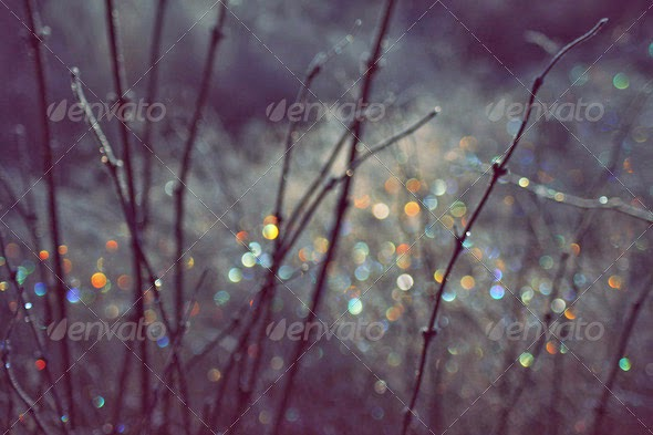free stock image, free stock images, winter scene, winter bokeh