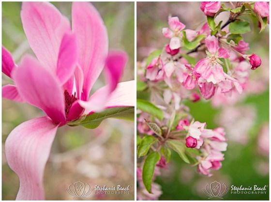 Ottawa Arboretum Magnolia and Crab Apple Tree