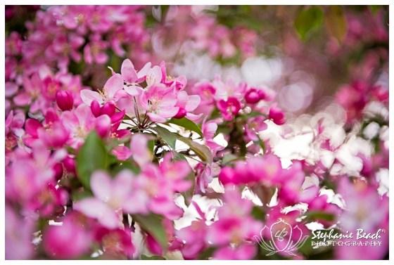 Ottawa Arboretum Blossoms Stephanie Beach Photography