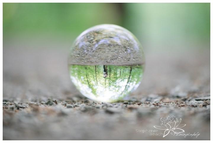 Monk-Environmental-Park-Engagement-Session-Stephanie-Beach-Photography