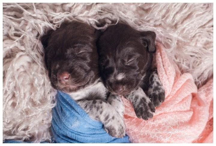 Ottawa-Newborn-Photography-Stephanie-Beach-Photography-Puppies