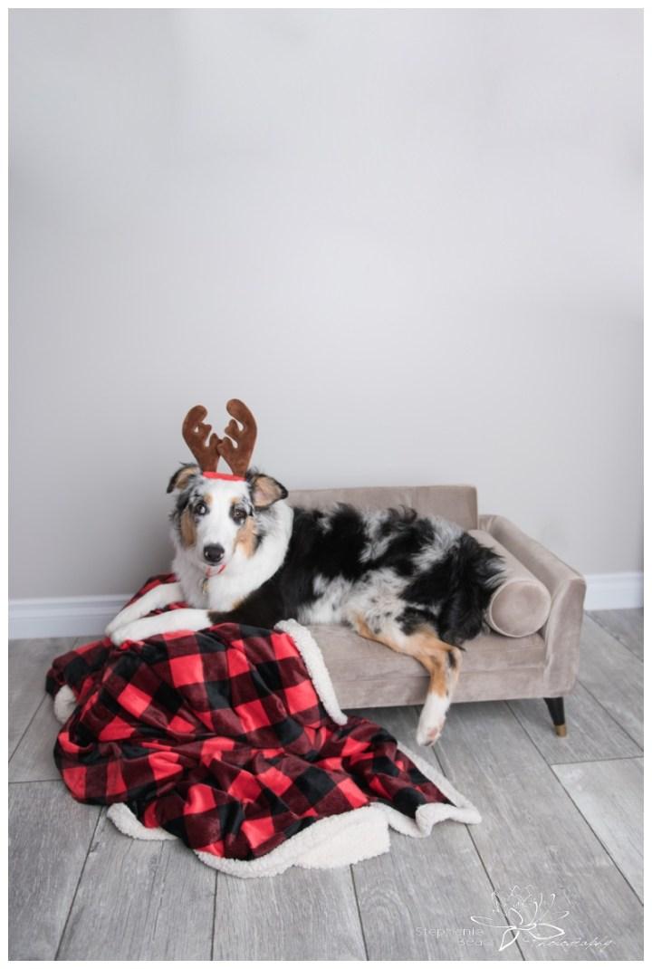 Kaylee-Photo-Stephanie-Beach-Photography-puppy
