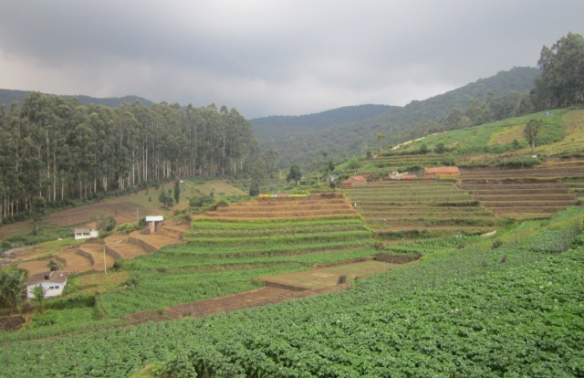 Kookal Cultivation Terrace Farming
