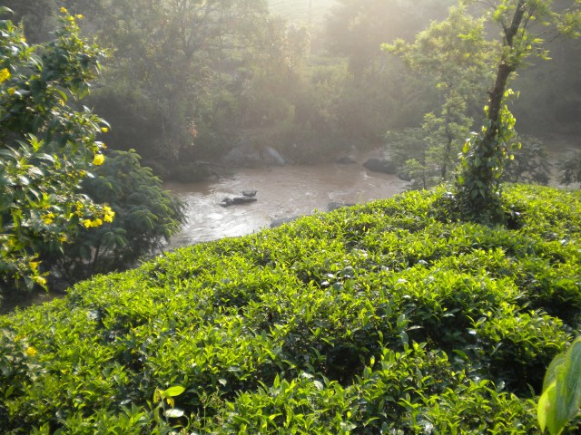 wayanad kerala places to visit